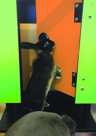 Our new furry social media star 'Cokey'